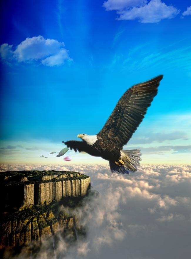 Bird Eagle Flying Bald Eagle Flight Fly Wild Background Image For