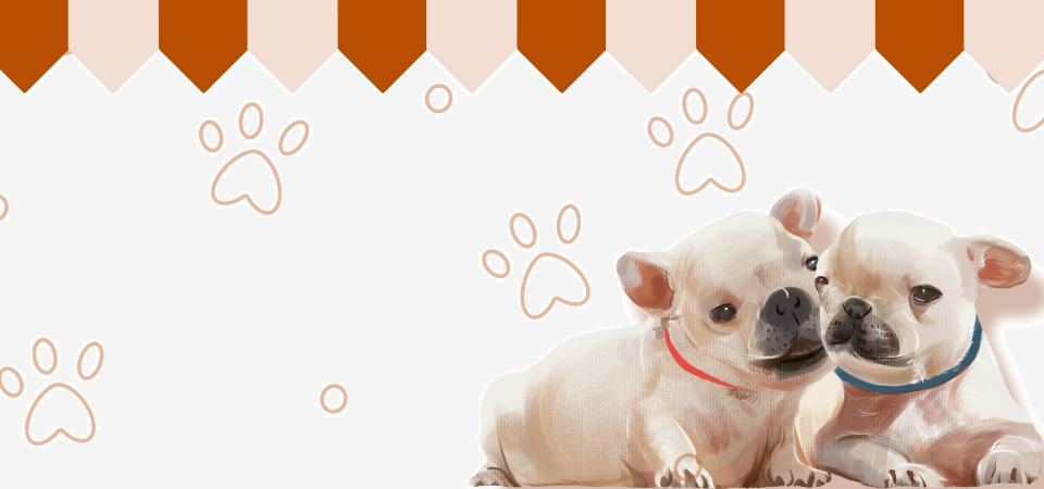 Pet Shop Adoption Cartoon Hand Painted White Banner Pet Shop Pet Shop Advertisement Pet Shop Flyer Special Offer Background Image For Free Download