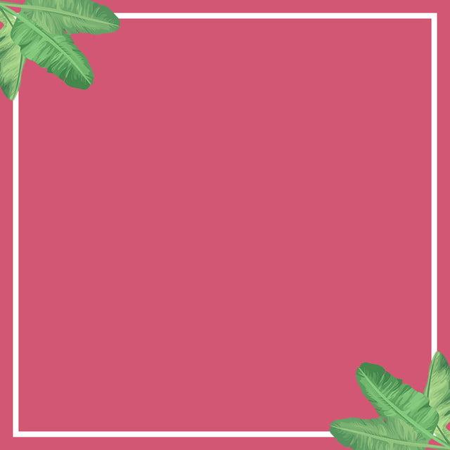 Màu Hồng Vẽ Tay Thực Vật Thanh Lịch Màu Hồng Sưu Hình ảnh