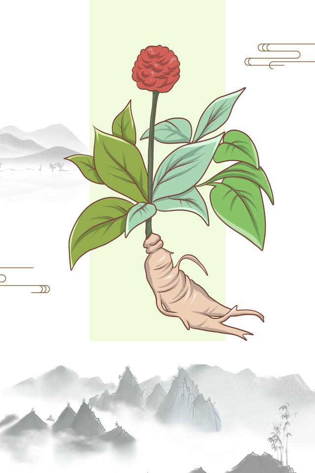 Dessin Animé Plantes Médicinales Chinoises Peintes à La Main