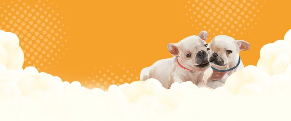 Cute Orange Pet Shop Promotion Banner Pets Supplies Food Background Image For Free Download