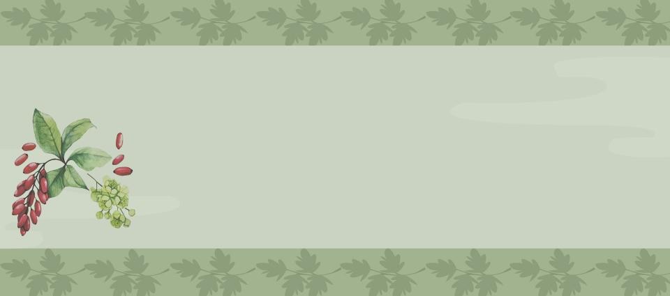 Green Herbal Medicine Banner Background Green Herb Medicine Background Image For Free Download