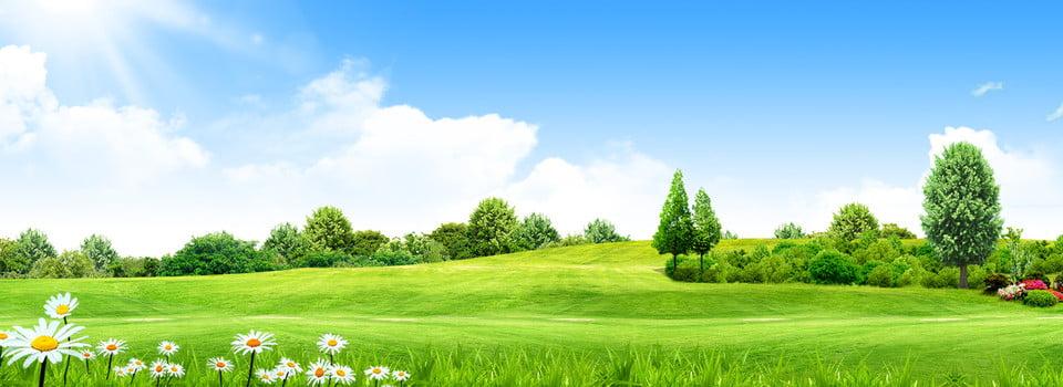 خلفية الحديقة الخضراء البيئية تحت أشعة الشمس الطازجة طازج أخضر مرج صورة الخلفية للتحميل مجانا