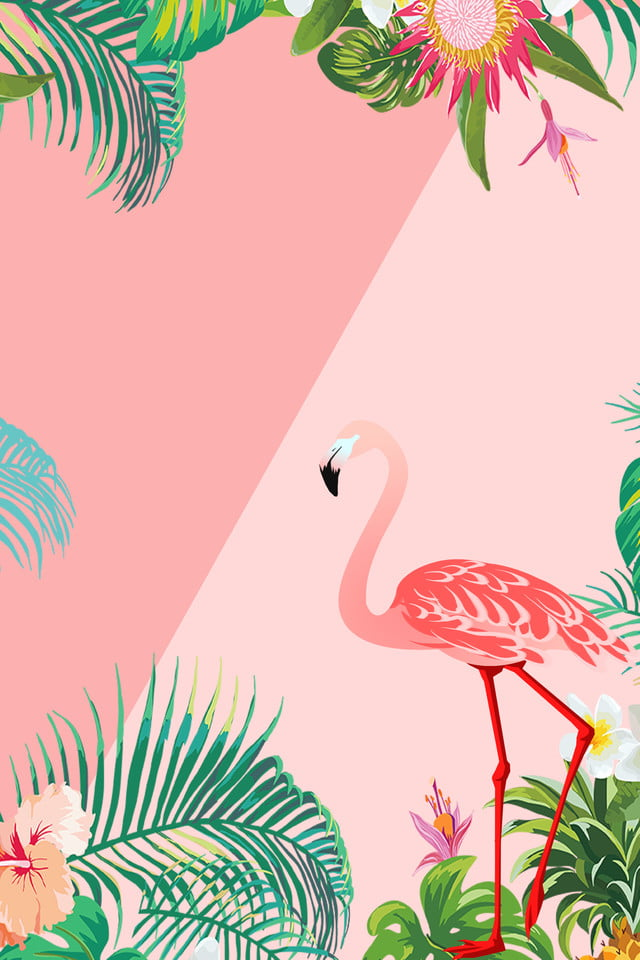 flamingo promotion pink contrast fresh background