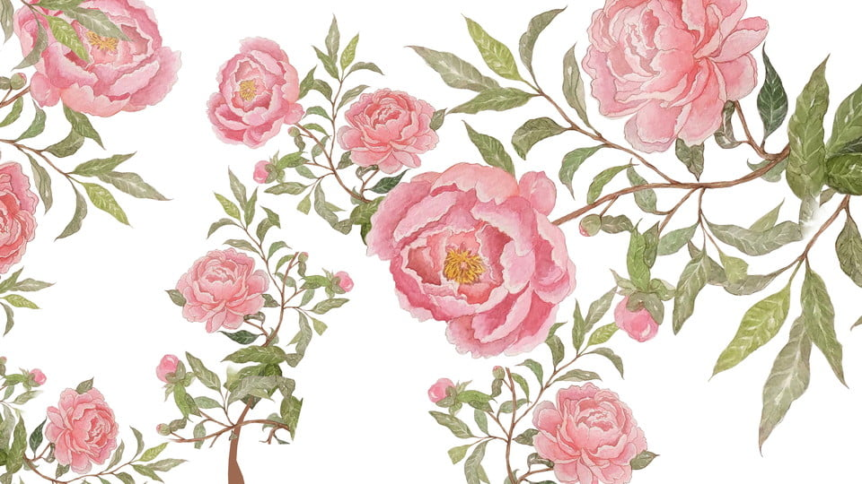 Vintage Rose Background Flowers Rose Elegant Background Image For