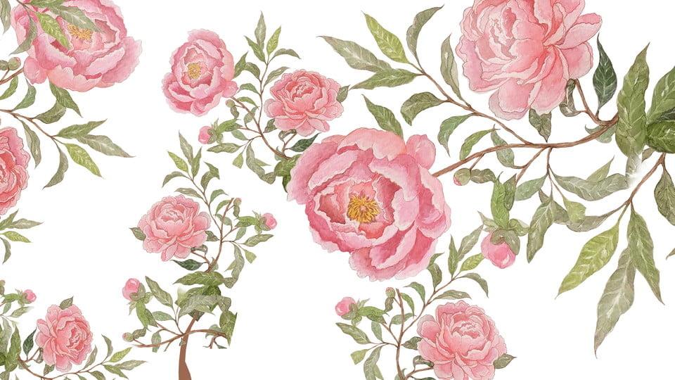 Rosa Vintage Background Flores Rose Elegante Imagen De Fondo Para