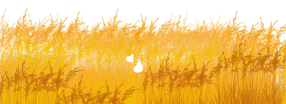Harvest Wheat Crops Big Picture Photography Background Image For Free Download