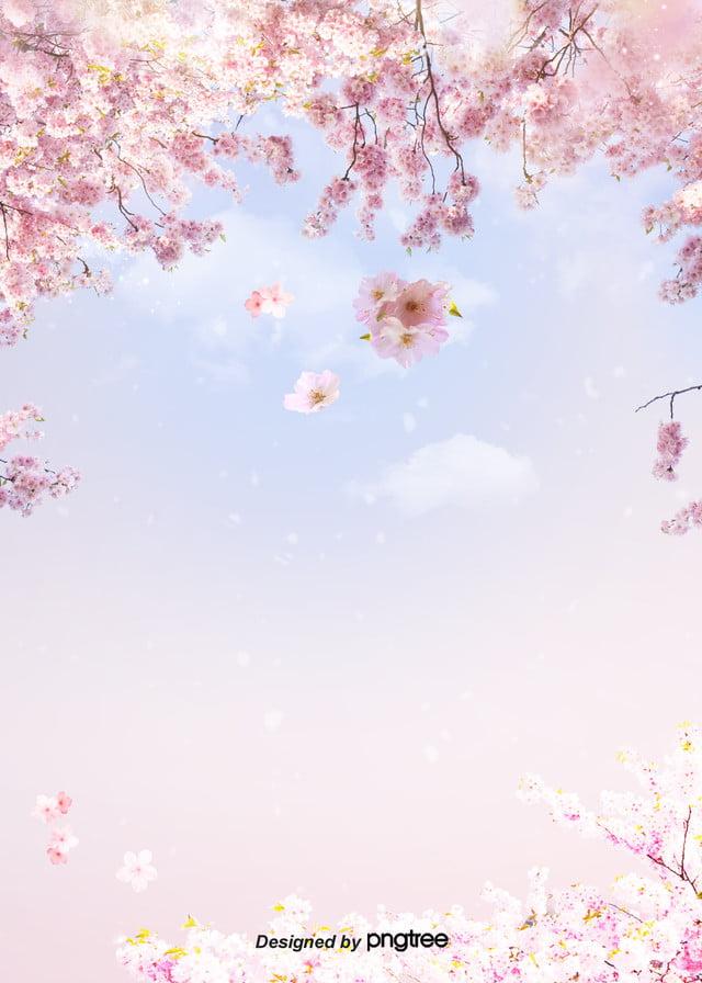 I Fiori Di Ciliegio Nuvole Blu Sullo Sfondo Del Cielo Fresco Le