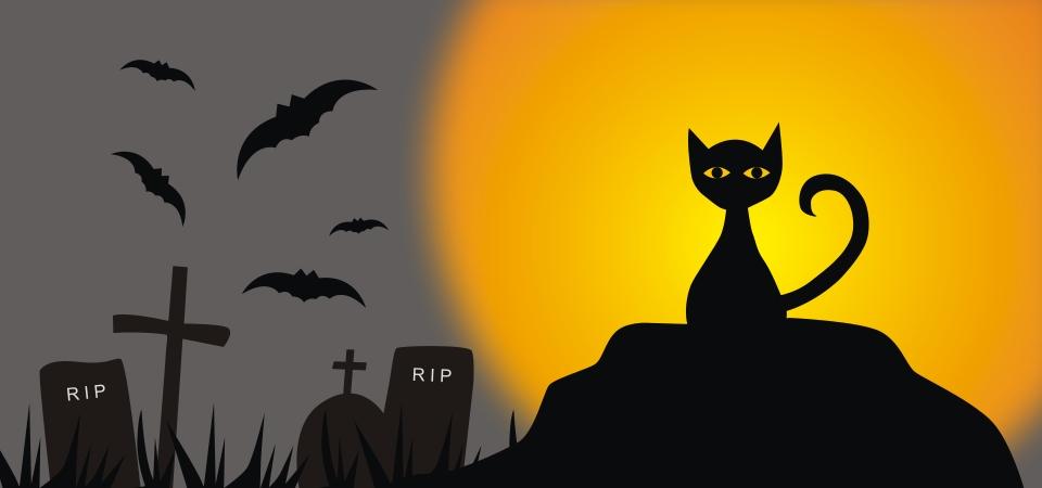 Halloween Background Graveyard Bat And Black Cat Silhouette Halloween Halloween Background Halloween Silhouette Background Image For Free Download