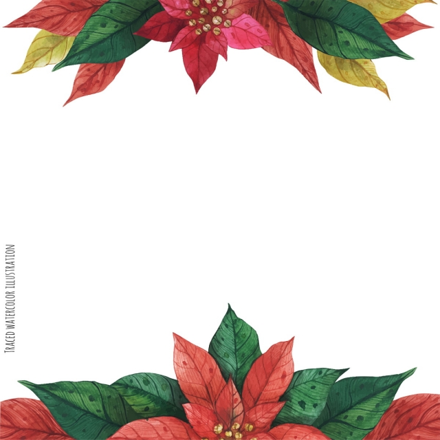Red Green Poinsettia Frame Christmas Poinsettia Star Background