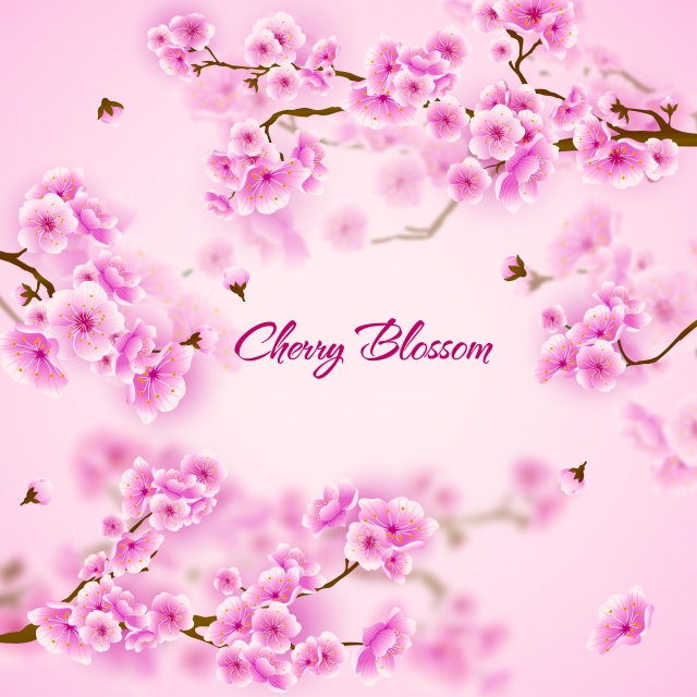 Pink Cherry Blossom Sakura Floral Background Orchid Flowers