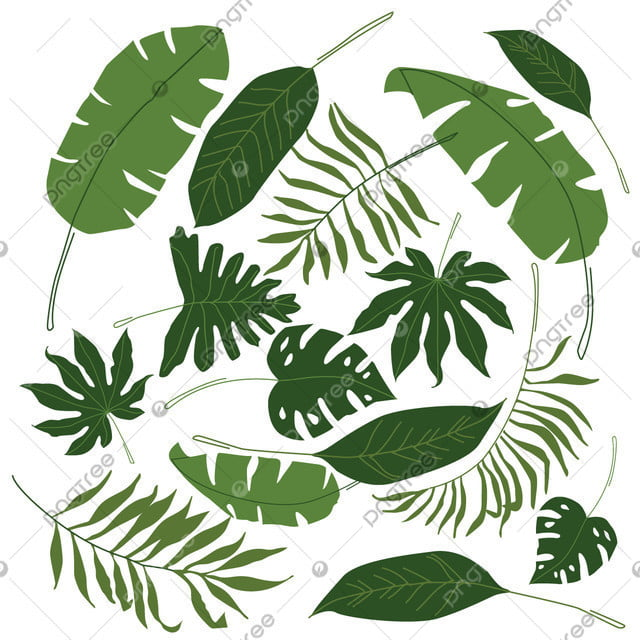Types Of Tropical Leaves Leaves Tropical Plants Vector Background Image For Free Download Take a look at these indoor tropical plants. https pngtree com freebackground types of tropical leaves 1177808 html